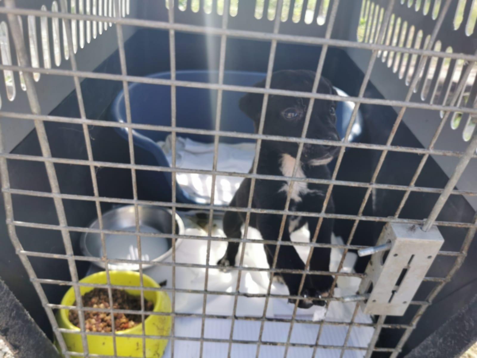 Opt câini și-au găsit familii, peste 250 încă așteaptă FOTO: S.A.